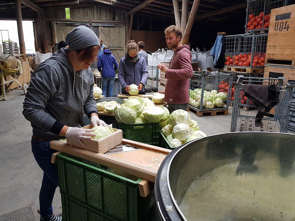 Sauerkraut Prudktion